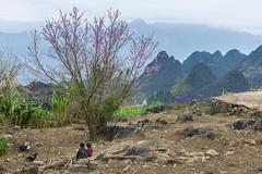 _J5K1958.0218.Lũng Phìn.Đồng Văn.Hà Giang. (hoanglongphoto) Tags: asia asian vietnam northvietnam northeastvietnam landscape scenery vietnamlandscape vietnamscene vietnamscenery spring hagianglandscape peachblossom tree mountain flanksmountain mountainouslandscape sky hdr canon canoneos1dsmarkiii canonef2470mmf28liiusm đôngbắc hàgiang đồngvăn lũngphìn phongcảnh phongcảnhhàgiang phongcảnhvùngcao mùaxuân hàgiangmùaxuân hoađào hoađàohàgiang phongcảnhcóngười núi sườnnúi bầutrời landscapewithpeople