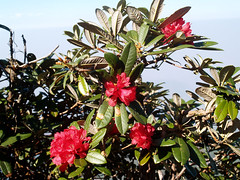 Flower garden at  Doi Inthanon mountain in Chiang Mai, Thailand. (www.icon0.com) Tags: asia asian beautiful blossom curb day decorated decoration design doiinthanon exterior flower flowerbed front garden gardener gardening grass green landscape landscaped landscaping lawn mountain natural nature outdoor outside peaceful perennial red relaxing sky stone summer thailand tranquil travel tree white yard