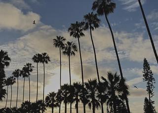 Blown-out sky, La Jolla