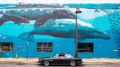 Save the Whales (Thomas Hawk) Tags: america bmw bmw30cs bmwe9 e9 newport oregon oregoncoast scottjordan scottevest usa unitedstates unitedstatesofamerica auto automobile car classiccar us fav10 fav25 fav50 fav100