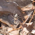 Spider thumbnail