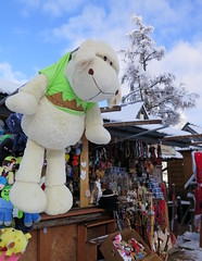 Zakopane-November'17 (140) (Silvia Inacio) Tags: zakopane poland polska polonia snow neve winter inverno tree árvore shop nuvens clouds