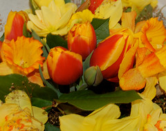 bouquet of flowers (earthdog) Tags: 2010 seattle travel vacation flower plant bouquet nikond50 nikon d50 1855mmf3556