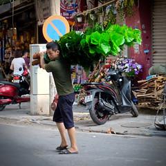 Plant Carrier (Mondmann) Tags: plant leaves man vietnameseman vietnamese vietnam hanoi northernvietnam asia southeastasia plantcarrier street streetphotography mondmann fujifilmxt10