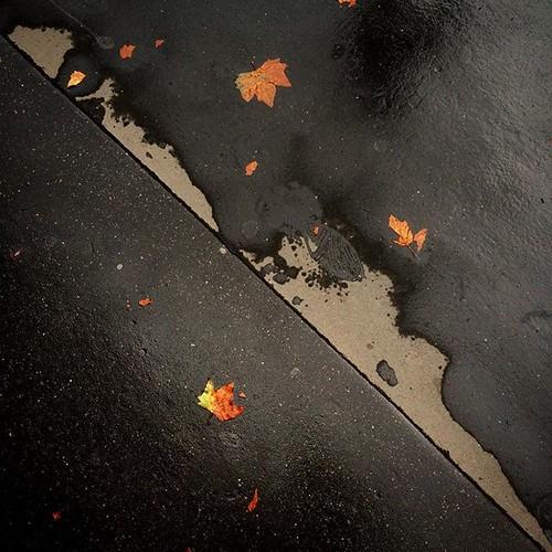 #pavement #Paris #automne