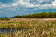 Wetlands Landscape (thatSandygirl) Tags: ottawanationalwildlifereserve ohio wetlands swamp marsh grass clouds spring may park nationalreserve nationalpark landscape water trees sky blue brown yellow green field outdoors nature