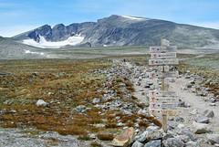 snøhetta (KvikneFoto) Tags: nikon1j2 landskap norge oppland hjerkinn dovre dnt