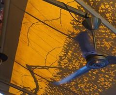 Mode active (periStatic) Tags: details crete fan shadow colour tree lines true image
