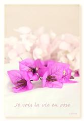 Je vois la vie en rose ❤ (c.ferrol) Tags: pastel rosa pink vie blancos suave hortensias bugambilla fucsia bouquet bokeh soft flor