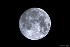 Pleine lune (Ezzo33) Tags: france gironde nouvelleaquitaine bordeaux ezzo33 nammour ezzat sony rx10m3 ville paysage lune nuit moon orange jaune bleu