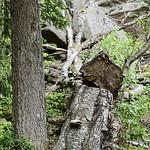 Harz_e-m10_1015194532 thumbnail