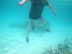 IMGP0092 (Christine Gerhardt) Tags: guido redsea rotesmeer ägypten underwaterphotography unterwasserfotografie fisch egypt