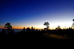 Spain Tenerife / Teide, National Park (h_j.sauermann2021) Tags: 2017 20171215spainteneriffa spain tenerife teneriffa sun sonne holiday urlaub landscape landschaft light licht colours farben sky sonnenuntergang sunset baum tree himmel blau blue dämmerung dusk berg mountain wald forest teidenationalpark