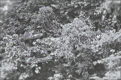 Kudzu [In Explore] (phthaloblu) Tags: phonepole foliage overtaking gso urbex2012 greensboro northcarolina usa