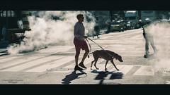 everyday walk (Nico Geerlings) Tags: cinematic cinematography cinematicphotography streetphotography urban 42ndstreet midtown manhattan newyorkcity nyc ny usa ngimages nicogeerlings silhouette silhouettes nicogeerlingsphotography fujifilmxt2 xf56mm