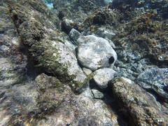 Undersea life... (Κώστας Καϊσίδης) Tags: undersea sea underwater chania crete mediterranean greece hellas visitgreece gopro underseascape underseaexploration fishes seaurchin urchin life undersealife