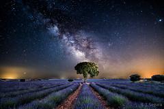 Via Láctea en Brihuega (V2) (Yorch Seif) Tags: vialactea milkyway noche night nocturna nocturnal lightpainting longexposure largaexposicion estrellas stars d7500 tokina1116