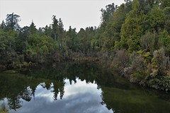 Kawhaka Creek, West Coast, South Island, New Zealand (Steve Attwood) Tags: auldwoodphotography steveattwood newzealand southisland landscape kawhakacreek reflection trees rimu bush rainforest creek water