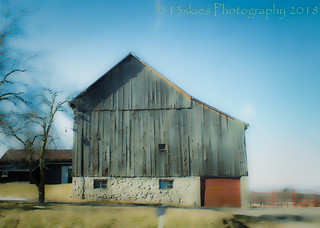 Timeless Mind (Barn Swallows) (HSS)