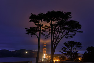 Cypress Trees of Golden Gate