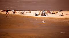 Eine Insel (petra.foto busy busy busy) Tags: strand stpeterording nordsee watt insel sonnenschirme strandleben hitze sommer schleswigholstein germany fotopetra canon 5dmarkiii