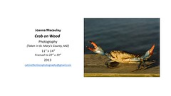 """Crab on Wood • <a style=""""font-size:0.8em;"""" href=""""https://www.flickr.com/photos/124378531@N04/29640284548/"""" target=""""_blank"""">View on Flickr</a>"""