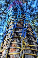 Photo 21-07-2018, 19 17 58 (Roda_Photography) Tags: photography vivid canon camera photo hd colorful nature tree blue yellow purple sky homemade diy portugal