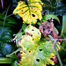 Winter Leaf 2