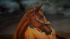 A good mood denies any bad weather (genevieve van doren) Tags: horse cheval badweather mauvaistemps
