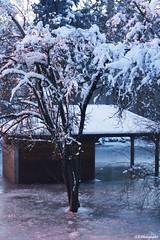 Eau gelée (Camille.45) Tags: gel neige hiver froid innondation arbre