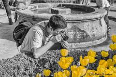 BOTANICO 1 (claverinza) Tags: nikon realjardínbotánicodemadrid flores tulipanes fotografiar photograph fotografo photographer fotografia photography