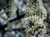 White Bokeh - Helios 44-2 58mm F2 (JackSoldano) Tags: bokeh helios 442 58mm f2 sunny day olympus sun light