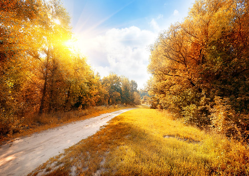 """Road in a colorful autumn forest • <a style=""""font-size:0.8em;"""" href=""""http://www.flickr.com/photos/151084956@N05/40747430495/"""" target=""""_blank"""">View on Flickr</a>"""