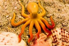 Macro Mondays: Plastic:  Plastic Toy Octopus (Glotzsee) Tags: macromondays plastic