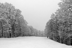 The Path (OzGFK) Tags: asia honshu japan cameraphone iphone6 travel myōkōshi niigataken jp treelined firtree wanderlust snowsport snow snowing cloudy serenity winter myokokogen myoko akakuraonsen
