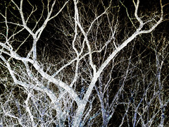 Experimentation 71 (Rossdxvx) Tags: textured texture textures tree trees texturized abstract art surreal surrealism silhouette experimental experimentation eerie lofi blackandwhite dark 2018 grim gloomy