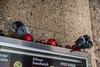 Döner Sandwich (JonasPotthoff) Tags: pigeon christmas döner