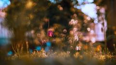 fantasy II (_andrea-) Tags: kaiserkrone schachbrettblume sonyalpha7mii objektiv outdoor mount carlzeiss planart1450 lowpov bokeh bokehshots bokehjunkie bokehs spring frühling andrea images