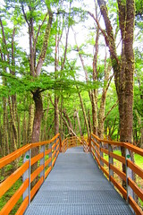 Naturaleza,senderos .,parque nacional los glaciares !! (Gabriel mdp) Tags: bosques naturaleza senderos caminos sur parque nacional los glaciares patagonia argentina