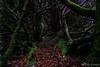 Old Garden Path (Nelleke C) Tags: 2017 letterdyfehouse roundstone connemara countygalway garden holiday ierland ireland tuin vakantie