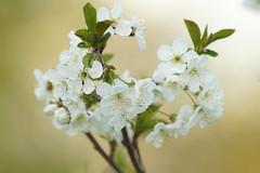 Весенние полутона / Spring halftones (Владимир-61) Tags: природа весна апрель nature spring april sony ilca68 minolta 100400 apo nationalgeographicwildlife ourplanet