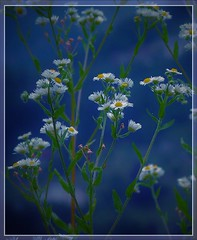L'arte della natura è... incantare gli occhi e la mente (ornella sartore) Tags: cielo azzurro fiori natura allaperto colori