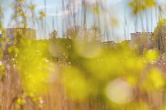 Helsinki Urban Area, Taka-Töölö (4) (pni) Tags: blur reed building töölönlahti tölöviken töölöbay inlet helsinki helsingfors finland suomi pekkanikrus skrubu pni
