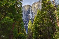 Yosemite Falls (markwhitt) Tags: markwhitt markwhittphotography california yosemitenationalpark yosemite yosemitevalley nationalpark usnationalpark waterfalls trees colorful colors mountain beautiful scenic travel vacation roadtrip nature scenery landscape outdoors