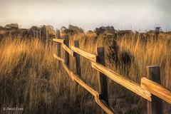 Golden Fenceline (HFF) (buffdawgus) Tags: california sanmateocountycoast sanmateocounty landscape anonuevo lightroom6 topazstudio canon70200mm28l canon5dmarkiii