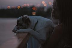 Tenderness (Margarita Shalak) Tags: dog animals collie border river nature evening sheepdog sunset
