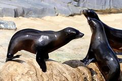 IMG_0662 (Bob_lewerissa) Tags: wildlands emmen zoo canon 80d 70200 l non is usm
