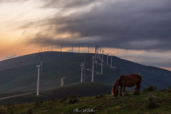 Energía limpia (Clear Of Conflict) Tags: atardeceranochecer dusk landscape windmill molino euskadi alava elgea pais vasco colorful specland clouds parque eolico nature naturaleza energia renovable paisaje euskal herria canon 6d horse caballo animals