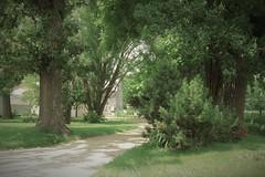 023a Farm lane Chana, IL (cshoemaker) Tags: illinois farm lane road summer nature barn canon rural trees prairie green