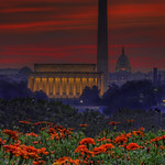 Flowers & Washington DC skyline sunrise thumbnail
